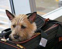 Як подорожувати з тваринами?